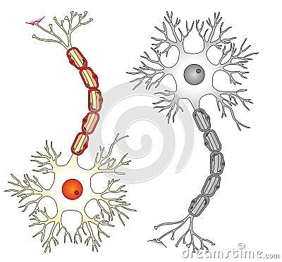 Neuron vector ilustration