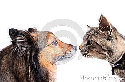 Neus aan neus kat en hond