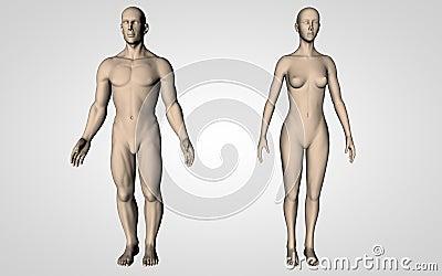 Neutral Human Bodies