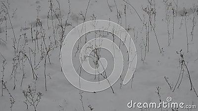 Neve e arbustos filme