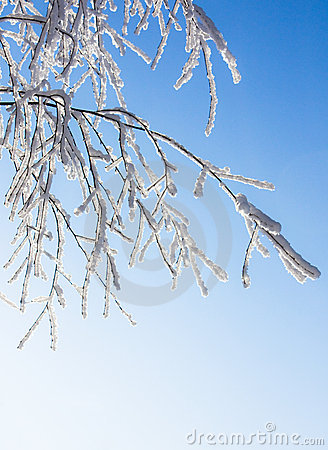 A Neve-geada cobriu a filial do vidoeiro