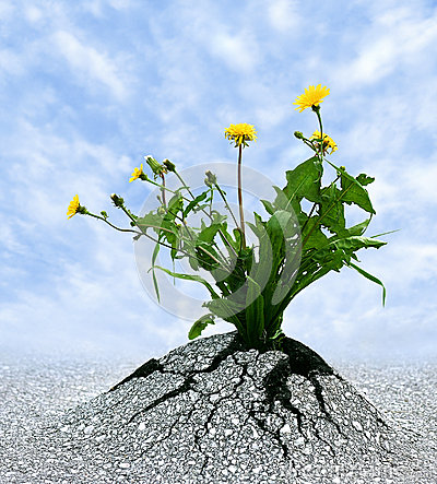 Symbol for many things in life. Persistence determination survival ...