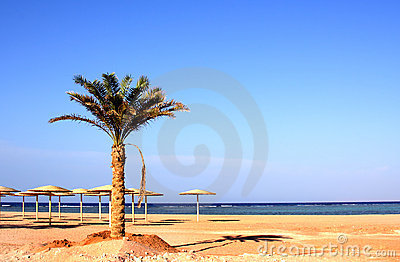 New beach in Nabk bay