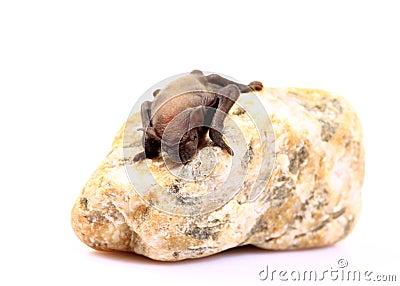 New born bat