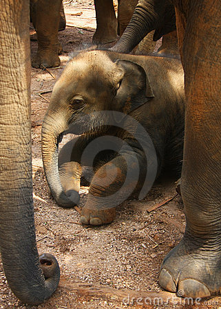 Free New-born Elephant-calf, Baby Royalty Free Stock Photo - 10280165