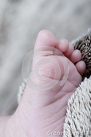 New born foot