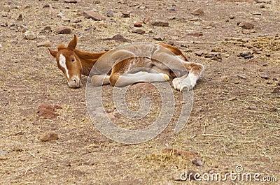 New Born Horse