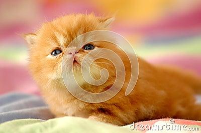 New born kitty