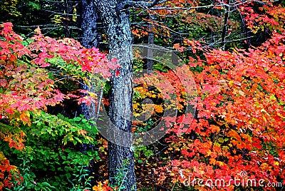 New England foliage Stock Photo