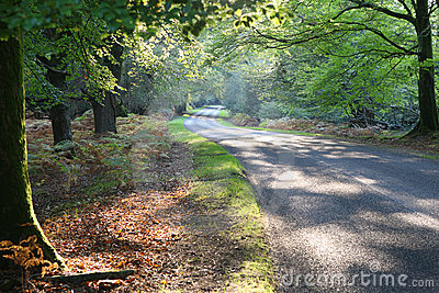 New Forest Drive in Autumn