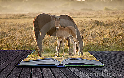 New Forest pony mare and foal in magic book