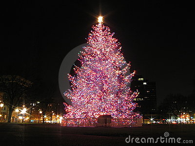 New Haven Christmas Tree