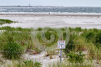 New Jersey Beach Bird Nesting refuge Editorial Stock Photo