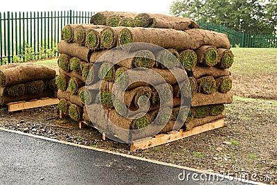 New Lawn?