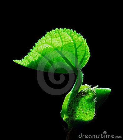 Free New Lease Of Leaf Life Stock Image - 17424831