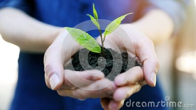 New life and environment conservation concept - woman holding young plant with soil in hands stock video