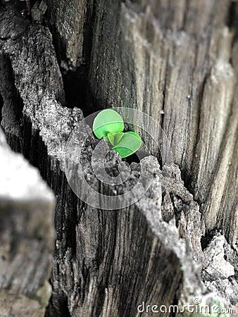 New Life - Hope
