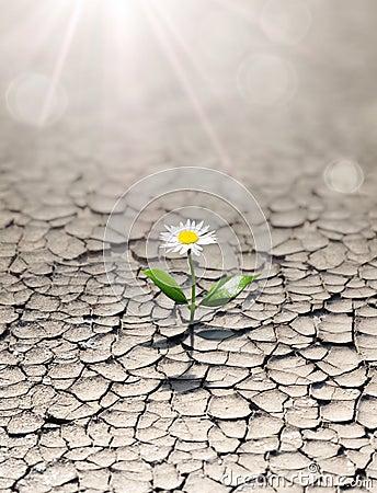 Free New Life In Arid Land Stock Image - 43947471