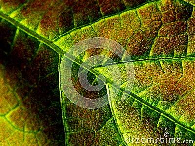New Life Leaf
