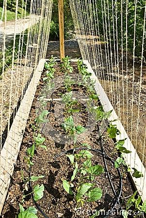 New Organic Garden