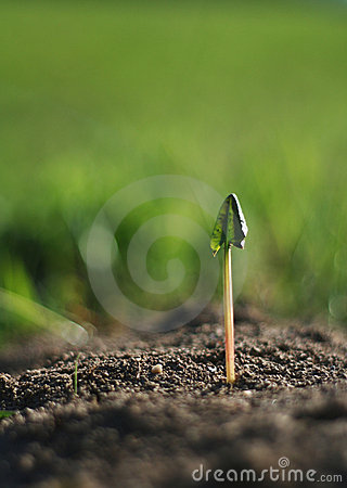 Free New Plant Stock Photography - 663352