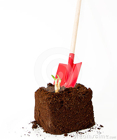 Free New Plant Growth Coming Out With A Garden Tool Stock Images - 24295344