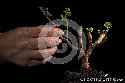 New plant, hand gesticular