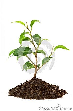 New plant life