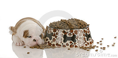 New puppy with dog food
