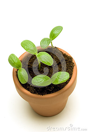 Free New Seedling In A Pot Overhead Shot Stock Photography - 27766902