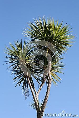 Free New Zealand Cabbage Tree Stock Photo - 16715790