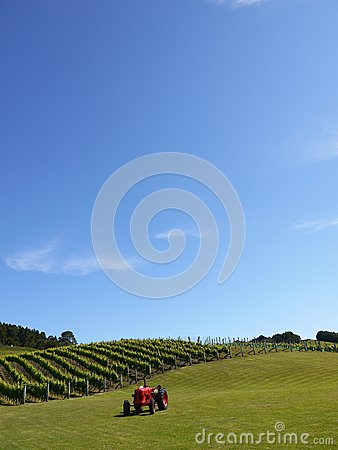 New Zealand: distant vineyard with red tractor