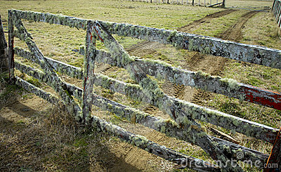 New Zealand farm gate