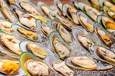 New Zealand green-lipped mussel