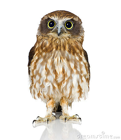 Free New Zealand Owl Royalty Free Stock Photography - 3182077