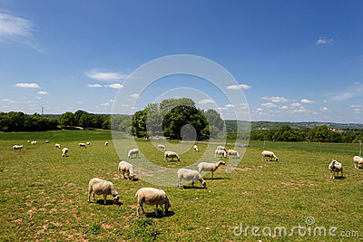 Blue sky and white clouds grass