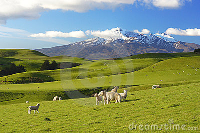 New Zealand Scenery Royalty Free Stock Photography Image