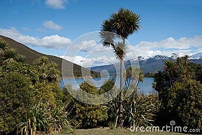 New Zealand scenic landscape.