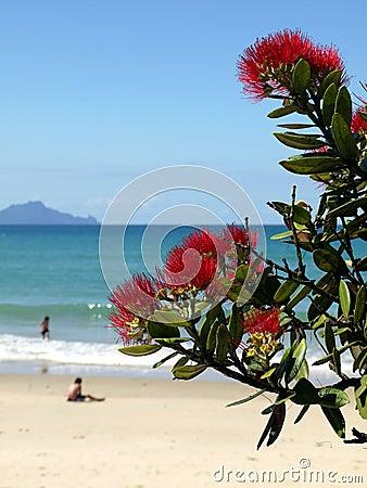 New Zealand: summer christmas at beach