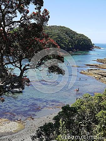 New Zealand summer: marine reserve