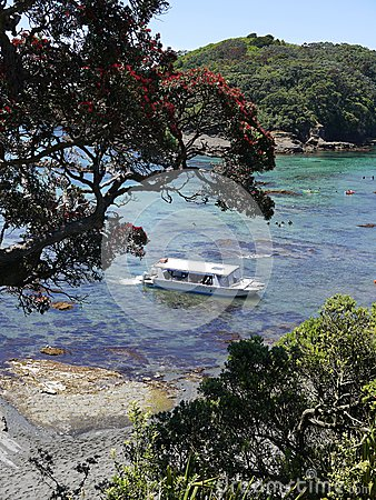 New Zealand summer: tourist boat at marine reserve