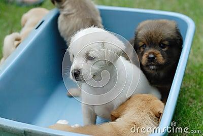 Newborn dogs