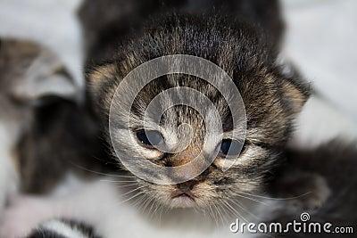 Newborn kitten.
