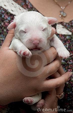 Newborn puppy dog