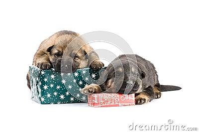 Newborn puppys