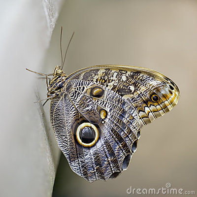 Newly Emerged Butterfly