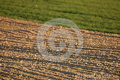 Newly ploughed agricultural field in spring