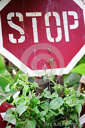 STOP Sign in the Jungle