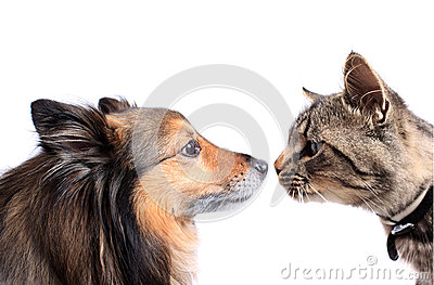 Nez pour flairer le chat et le crabot
