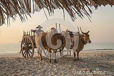 Ngapali Beach - Rakhine State - Myanmar (Burma) Editorial Image